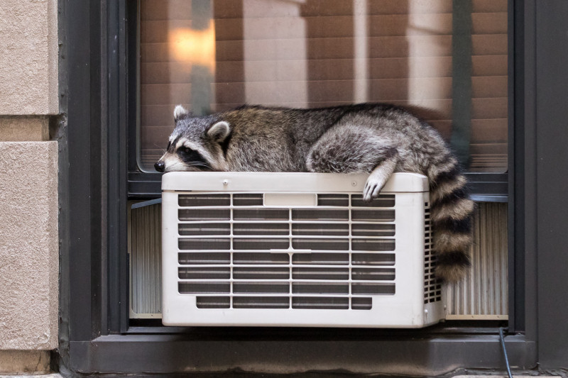 A cheap window AC has budget appeal, but be wary - you get what you pay for, and can be dangerous!